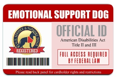 Service Animal Id Cards Service Dog Vest And Id Card